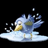 Little Bird Jumping icon
