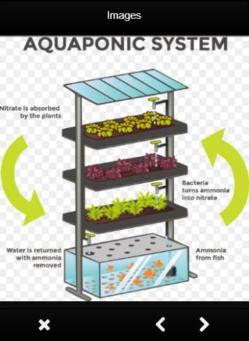 Hydroponics How It Works poster