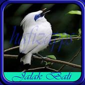 Kicau Burung Jalak Bali icon