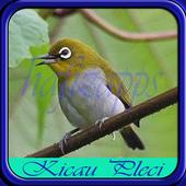 Kicau Burung Pleci icon