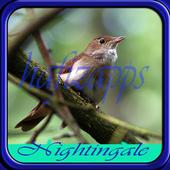 Master Kicau Burung Nightingale icon