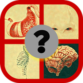 What is this body organ? icon