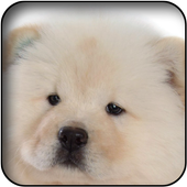 Baby Dog Wallpapers icon