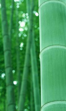 Bamboo wallpapers apk screenshot