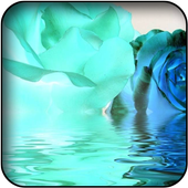 Blue roses wallpapers icon
