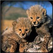 Cheetah Wallpapers icon