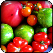 Tomatoes Wallpapers icon