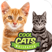 Cool Cats Wallpaper Collections - 'Cute' icon