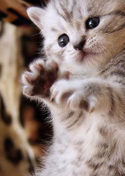 Cool Cats Wallpaper Collections - 'Cute' screenshot 1