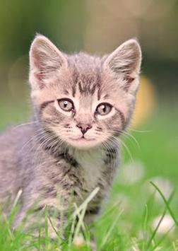 Cool Cats Wallpaper Collections - 'Cute' screenshot 2