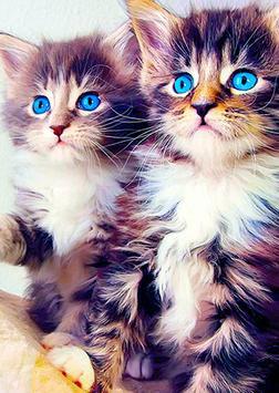 Cool Cats Wallpaper Collections - 'Cute' screenshot 3