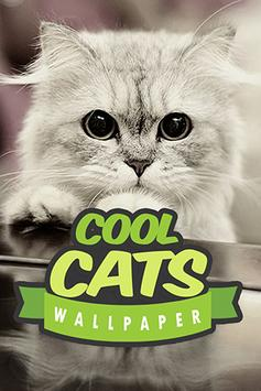Cool Cats Wallpaper Collections - 'Cute' screenshot 4
