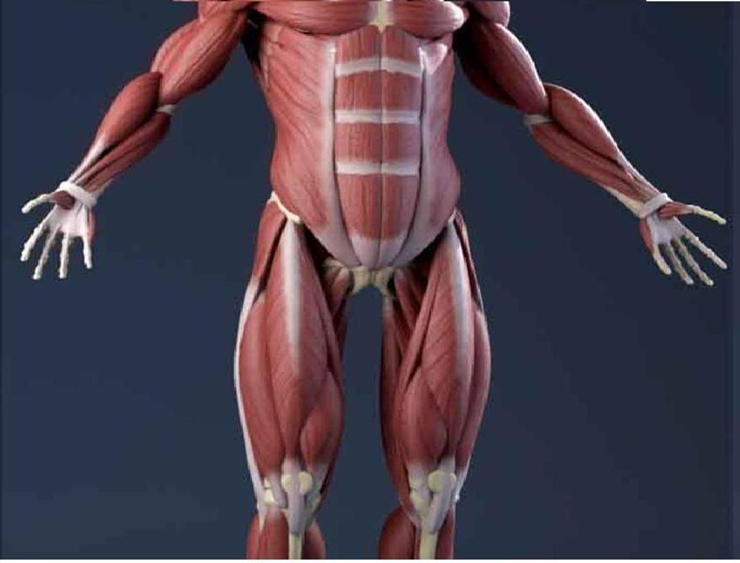 Anatomía 3D Descarga APK - Gratis Educación Aplicación para Android ...