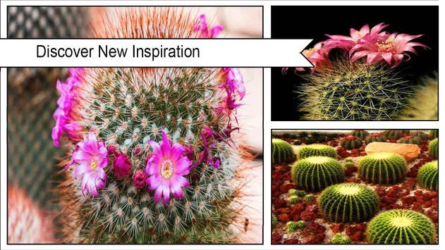 Cactus Flower Wallpaper poster