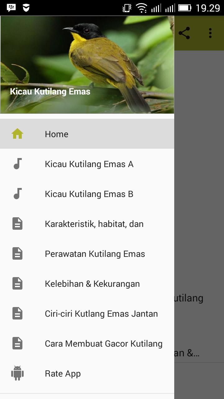 Kicau Kutilang Emas For Android Apk Download