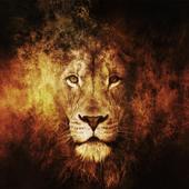 Wild Theme icon