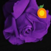 Purple Theme icon