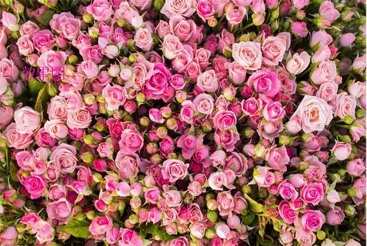 Blooming rose flowers puzzle screenshot 3