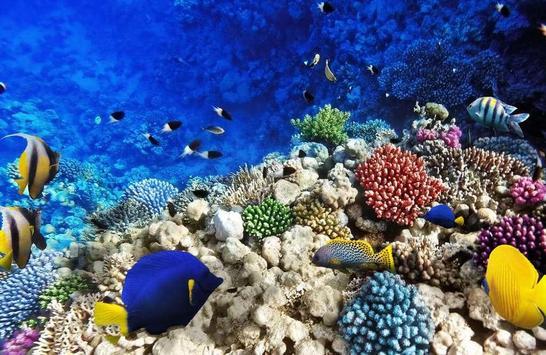 Ocean Fantasy World Puzzle screenshot 1