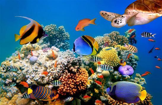 Ocean Fantasy World Puzzle screenshot 4