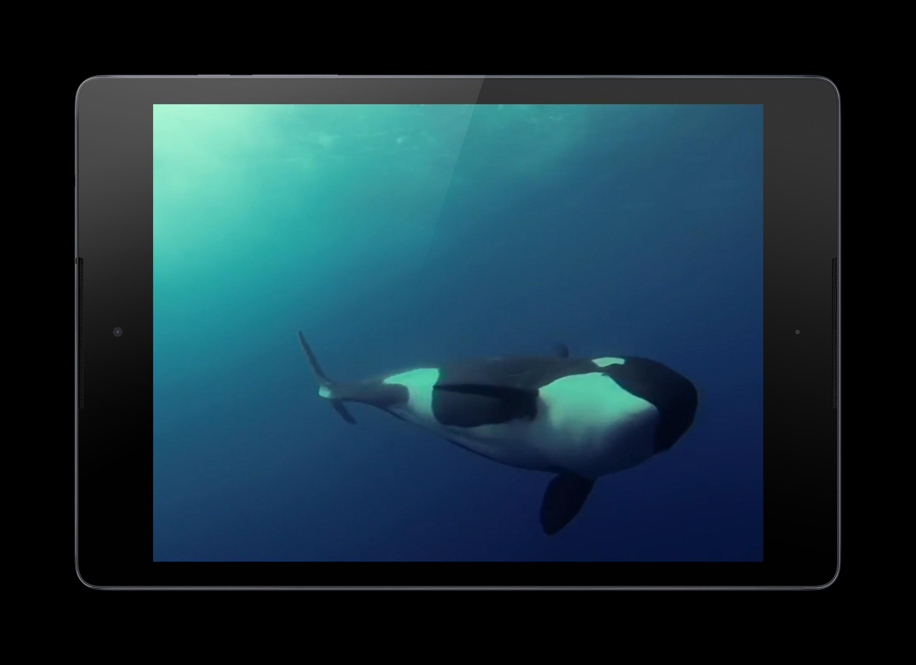 Orca Live Wallpaper for Android - APK Download