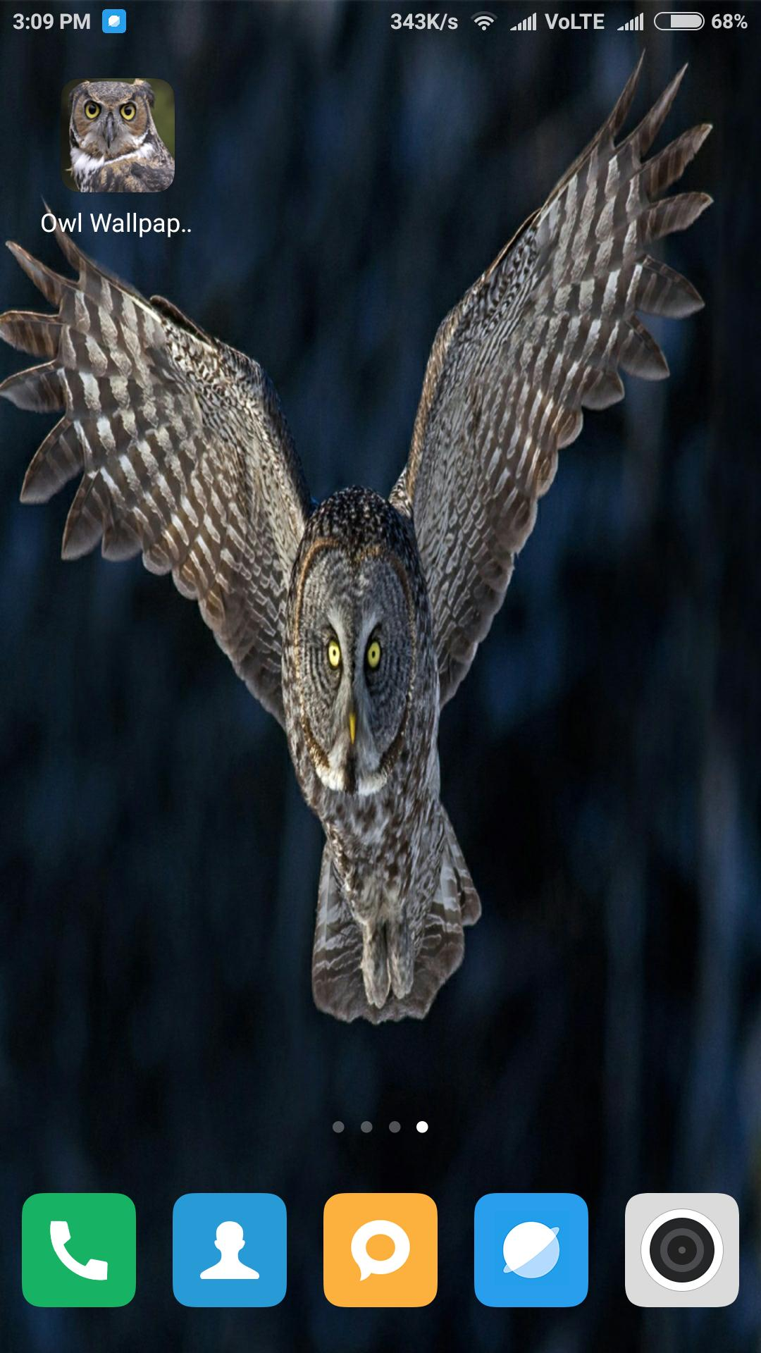 Hd Owl Wallpaper For Android Apk Download