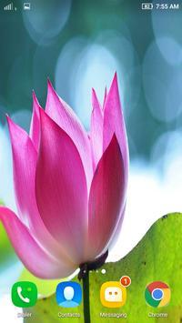 Hd lotus flower wallpaper apk download free personalization app hd lotus flower wallpaper apk screenshot mightylinksfo