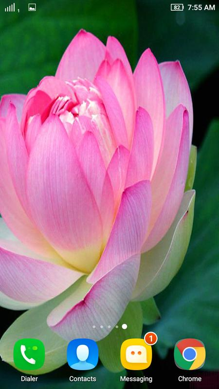 Lotus Flower Wallpaper For Android Amatwallpaperorg