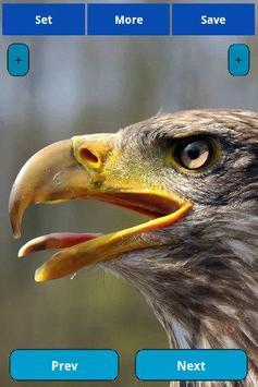 Eagle wallpapers apk screenshot