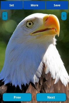 Eagle wallpapers poster