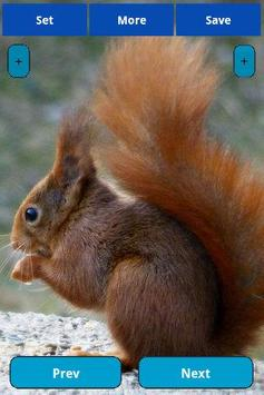 Squirrel Wallpapers screenshot 5