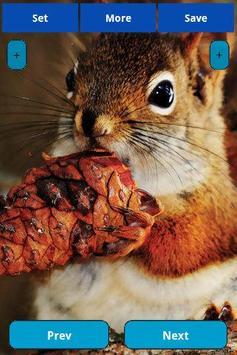 Squirrel Wallpapers screenshot 6