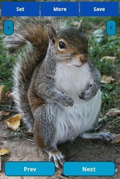 Squirrel Wallpapers screenshot 7