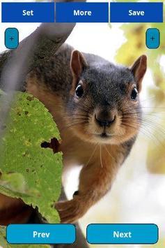 Squirrel Wallpapers screenshot 1