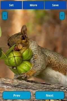 Squirrel Wallpapers screenshot 2