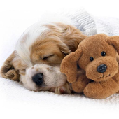 Sleepy animals Wallpapers icon