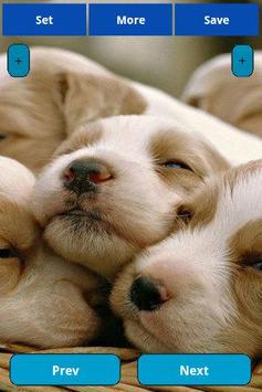 Sleepy animals Wallpapers apk screenshot