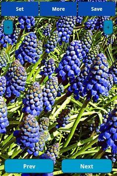 Blue Flowers Wallpapers apk screenshot