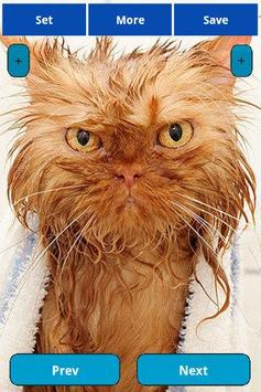Wet Cats Wallpapers apk screenshot
