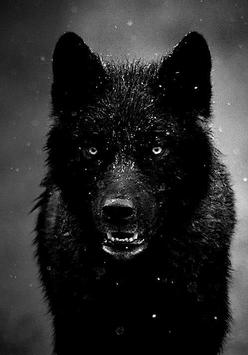 Cool Wolf Wallpapers Apk Screenshot