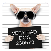 Funny Bad Dogs Live Wallpaper icon