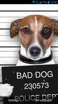 Funny Bad Dogs Live Wallpaper poster