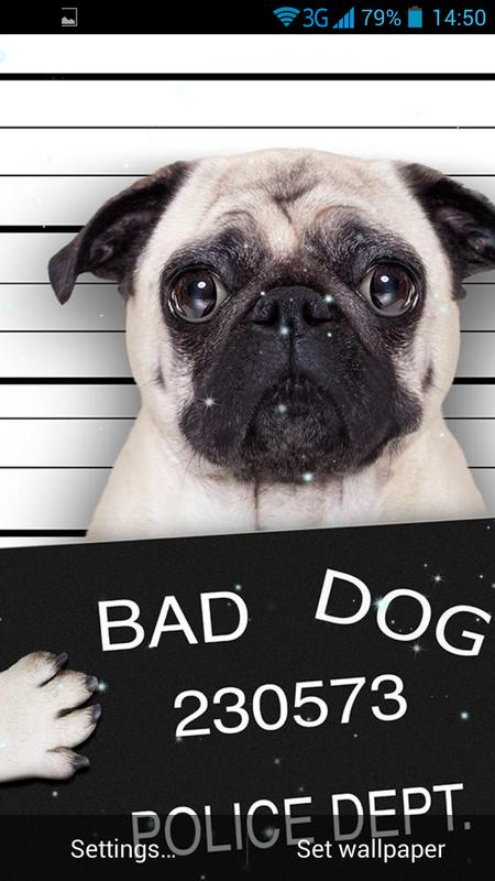 Funny Bad Dogs Live Wallpaper Screenshot 2