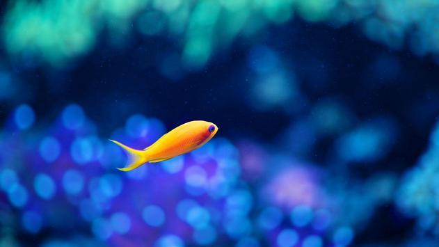 Fish HD Wallpaper screenshot 3