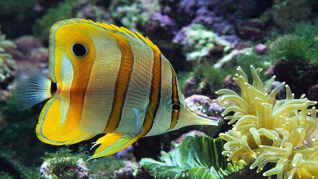 Fish HD Wallpaper screenshot 5