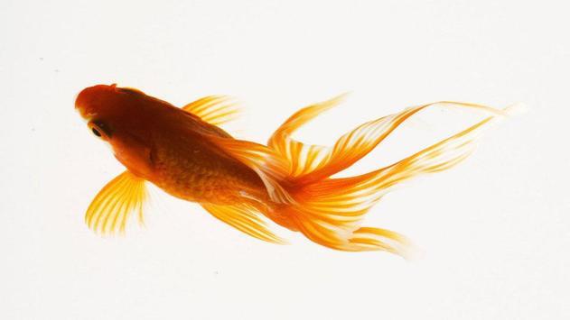 Fish HD Wallpaper screenshot 6