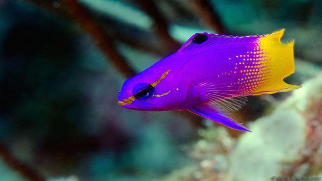 Fish HD Wallpaper screenshot 7