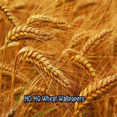 HD HQ Wheat Wallpapers icon