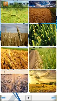 HD HQ Wheat Wallpapers poster