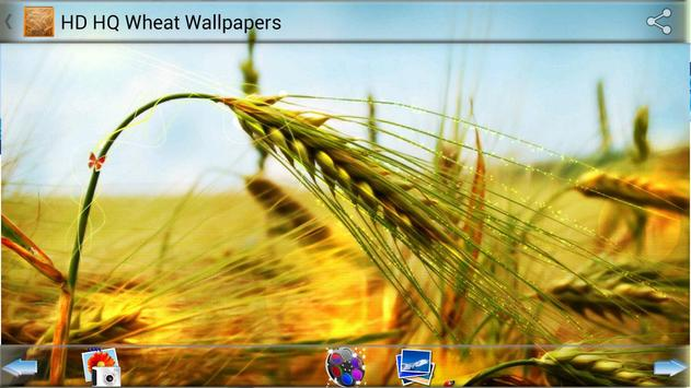 HD HQ Wheat Wallpapers apk screenshot